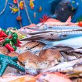 Special ceramic depictions of fish typical of the Mediterranean Sea Royalty Free Stock Photo