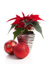 Special christmas plant poinsettia and red balls over white backround Stock Images