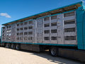 Special truck and trailer for transportation of pigs