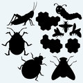 Species of insects