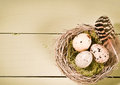 Speckled Eggs And Feather In Nest Stock Images
