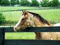 Speckled gentleman horse in a pasture on a horse farm Stock Images