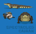 Spectacled Caiman Cartoon Vector Illustration