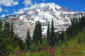 Spectacular Mt. Rainier with wildflowers Royalty Free Stock Photo