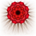 Spectacular red flower on a white background raster copy of vector image Stock Image