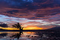 Spectacular stormy sunset in the philippines on the island of siquijor with a lone mangrove tree silhouetted against the fiery Royalty Free Stock Photography