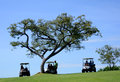 Spectators at golf tournament in carts under tree watching Stock Images