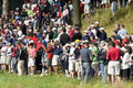 Spectators intensely watch Tiger Stock Photography