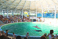 Spectators on representation in the dolphinarium eupatorium ukraine Royalty Free Stock Images