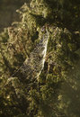 Speder web in a small bush during autumn spider tree with water drops on the jh Stock Photos