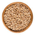 Spelt without husks in wooden bowl over white