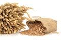 Špalda pšenica