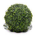Sphere from green artificial grass on plate isolated Stock Photos