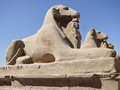 Sphinxes in sunny ambiance Stock Photo