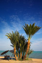 Spiaggia di paradiso della palma Fotografie Stock