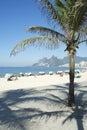 Spiaggia rio de janeiro arpoador palm tree di ipanema Fotografia Stock