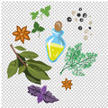 Spices and flavorings vector illustration isolated