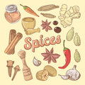 Spices Hand Drawn Doodle with Chili Pepper and Garlic. Healthy Eating Natural Food