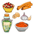 Spices seasoning hand drawn style food herbs elements and seeds ingredient cuisine flower buds leaves food plants