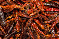 Spicy dry ingredient Royalty Free Stock Images