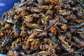 Spicy fried crickets usually in oil with garlic salt sugar and local herbs sold as street food in cambodia at skuon the capital of Royalty Free Stock Photography