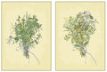 Spicy herbs collection of fresh herbs illustrati illustration Stock Photography