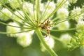 Spider(Araneidae). Royalty Free Stock Photo