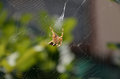 Spider attack Royalty Free Stock Photo