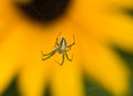 The spider is beneficial to human and harmful but in terms of its contribution is mainly beneficial insects there are many types Stock Photography