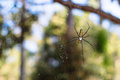 Spider bokeh forest hdwallpaper nature thailand wallpaper web Royalty Free Stock Photo