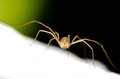 Spider brown on white surface Stock Photography