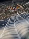 Spider in cobweb Royalty Free Stock Image