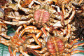 Spider-crabs Stock Image