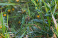 Spider in Dew Covered Web Stock Photos
