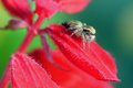 Spider on flower sitting red in park Royalty Free Stock Images