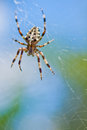 Spider with his web in day Stock Images