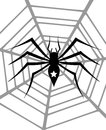 Spider image representing a black with star on a cobweb Stock Image