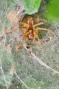 Spider in its web nest details of Royalty Free Stock Images