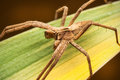 Spider on leaf Royalty Free Stock Images