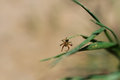 Spider on a leaf picture of Stock Photo