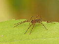 Spider on leaf sitting a yellow green Stock Image
