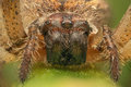 Spider macro shot front view Royalty Free Stock Photo