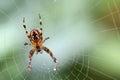 Spider Macro On A Web Focus Bo...