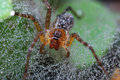 Spider In Morning Dew Stock Images
