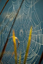 Spider net detail close up view of a in grass with water drops Stock Photography