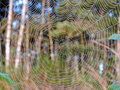 Spider net in dew Royalty Free Stock Photo
