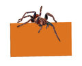 Spider Over Blank Sign Royalty Free Stock Photo