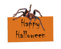 Spider Over Happy Halloween Sign Royalty Free Stock Photo