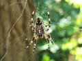 Spider romania in the forest by the river siret Royalty Free Stock Photos