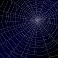 Spider's web Royalty Free Stock Photo